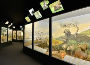 Latvian Museum of Natural History